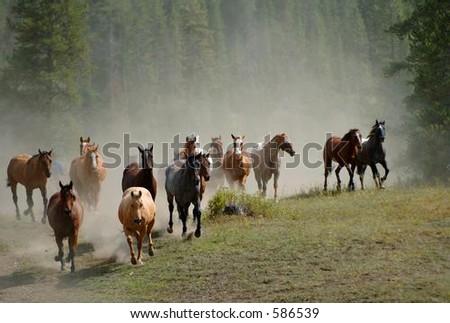 Horse Drive #2 - stock photo