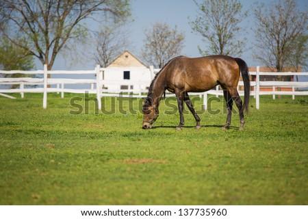 Horse eating - stock photo