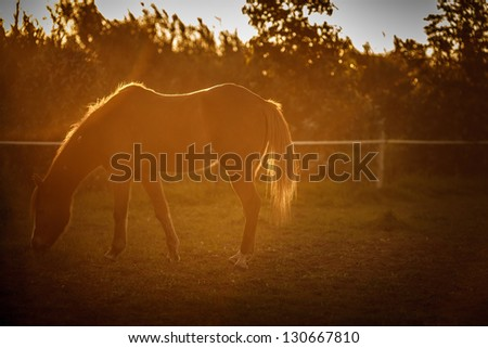 Horse eating during the sunset - stock photo