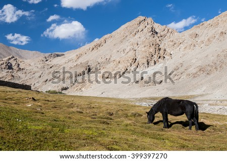 Horse eating grass in himalayan valley, Ladakh, India - stock photo