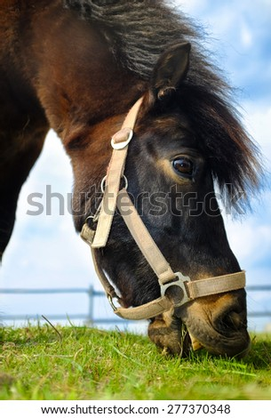Horse eating grass with sky and sun background - stock photo