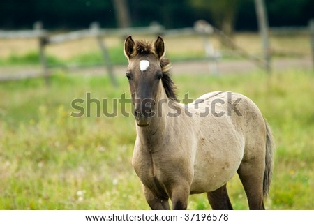 horse eating green grass in the pasture on a sunny day - stock photo