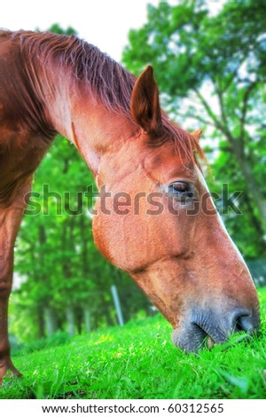 Horse eats grass. - stock photo