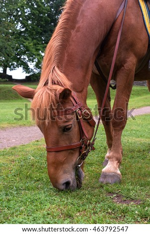 horse eats grass. On the muzzle brid