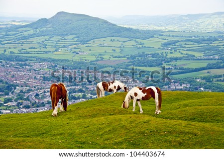 Horse enjoy eating grass at Brecon Beacons National park in Wales, UK - stock photo