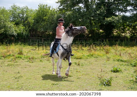 Horse evading the bit by raising his head & opening his mouth.  - stock photo