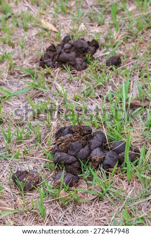 Manure Stock Photos, Images, & Pictures | Shutterstock