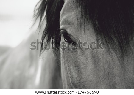 Horse Eye Close-Up - stock photo