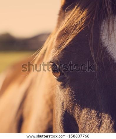 Horse eye closeup - stock photo
