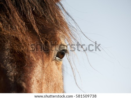 horse eye closeup on blue