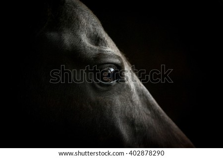 horse eye closeup on dark background - stock photo