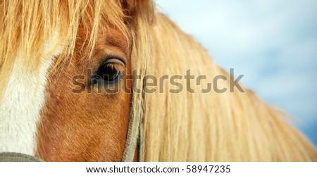 Horse eye. Element of design. - stock photo