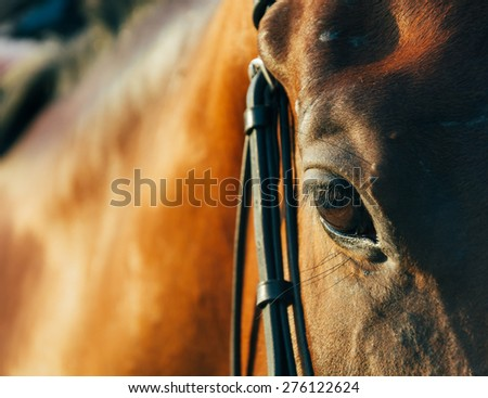 horse eye - soft focus with film filter - stock photo