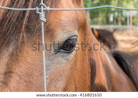 Horse eye with metal fence - stock photo