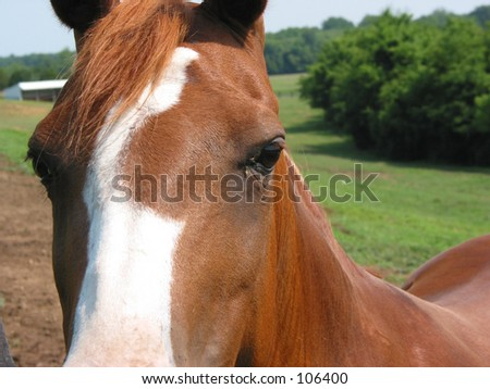 Horse face up close