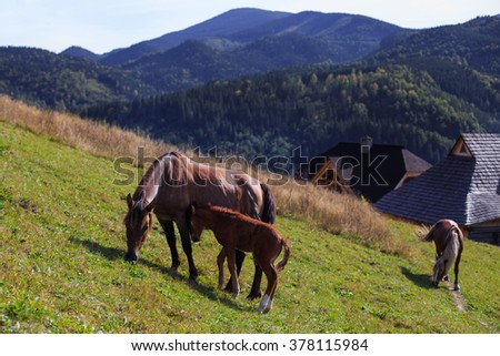 Horse family on the slope - stock photo