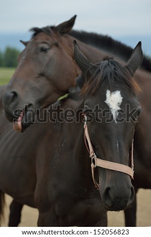 horse farm animal  group in the field