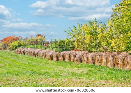 Horse farm in Kentucky.  A horse grazing in a meadow behind rolls of harvested hay on a farm in Kentucky. - stock photo