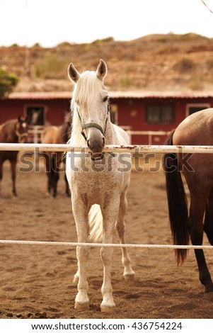 Horse farm on a sunny day. White horse standing near fence. - stock photo