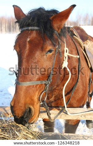 horse feeding outdoors in winter - stock photo