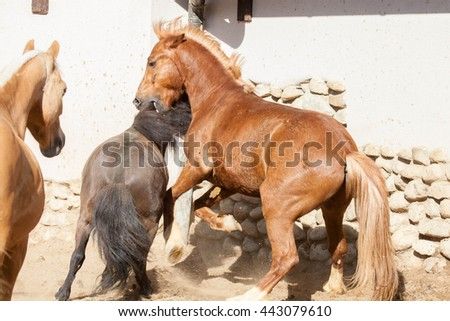 Horse fighting. Horse on nature, brown horse - stock photo