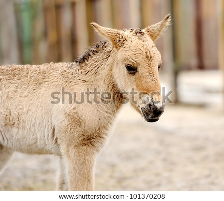 Horse foal - stock photo