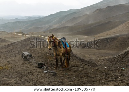 Horse for Tourist at edge of volcano . The volcano east Java sometime erupt and let out a flood of lava beach. - stock photo