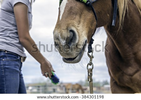 Horse getting groomed by person