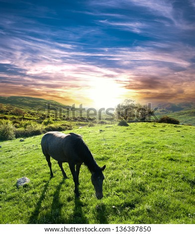 horse grazing in a meadow at the sunset - stock photo