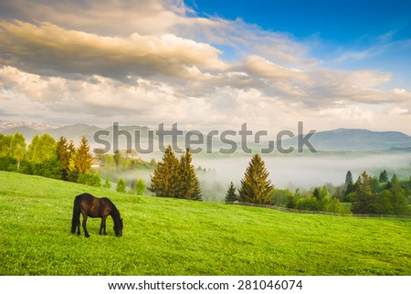 Horse grazing in a meadow in a Ukrainian mountain valley. Early morning - stock photo