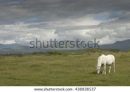 Horse grazing in a meadow in UK. summer