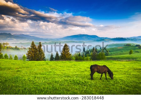 Horse grazing in a meadow Ukrainian Carpathian mountain valley. Early misty morning - stock photo