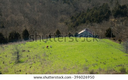 Horse Grazing in Field with Barn - stock photo