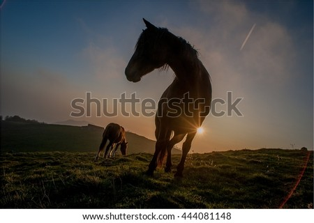 horse grazing in freedom
