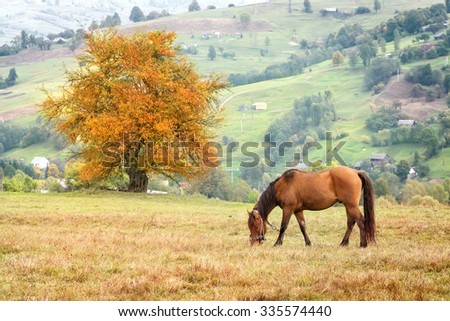 Horse grazing in grass on background mountain villages - stock photo