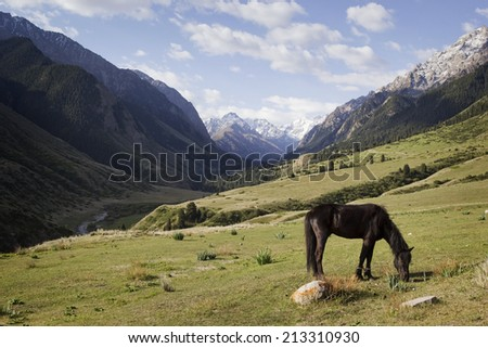 Horse grazing in the background mountains, Kyrgyzstan. - stock photo