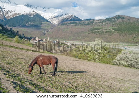 Horse grazing in the meadow, Svaneti, Georgia