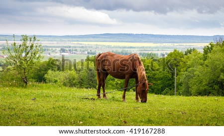 Horse grazing in the pasture, nature landscape - stock photo
