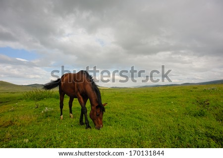 Horse grazing in the steppe - stock photo