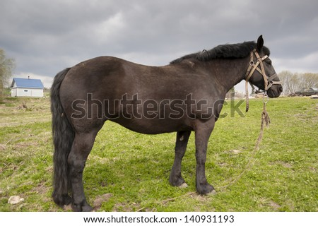 Horse grazing on a meadow in the village
