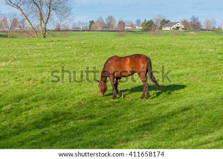 Horse grazing on green pastures of horse farm. Country spring landscape. - stock photo