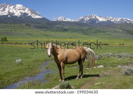 Horse grazing on ranch land in Summit County, Colorado, with Gore range of mountains in background, spring.  - stock photo