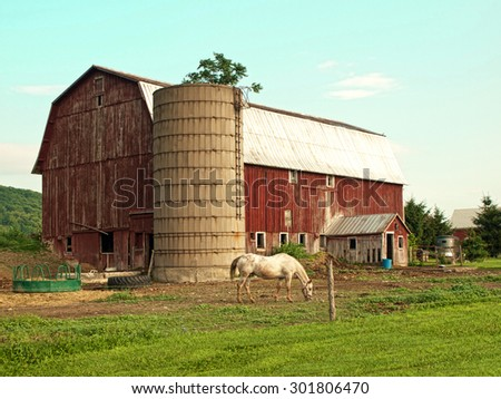 horse grazing outside barn on a beautiful summer day - stock photo