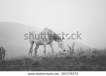 Horse Grazing the Grass in the Fog