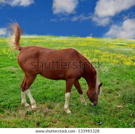 horse green grass sky tail - stock photo