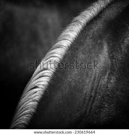 Horse hair,close up black and white  - stock photo