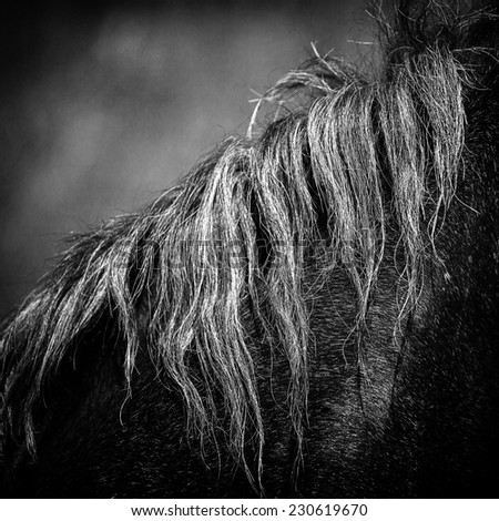 Horse hair,close up black and white