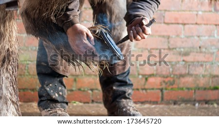 Horse having a metal shoe fitted - stock photo