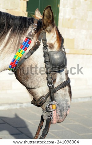 horse head - stock photo