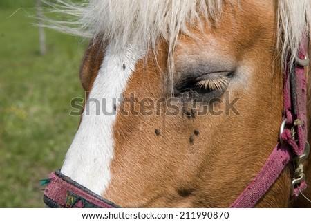 horse head close up - stock photo